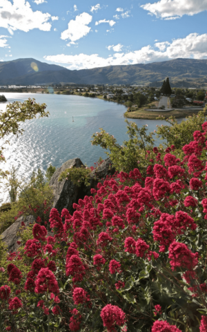 View of Old Cromwell & The Junction Lake Dunstan Crafted Journeys Central Otago Tour