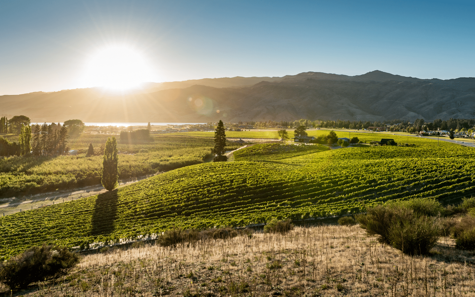 View from Scott Base Vineyard across to Lake Dunstan Crafted Journeys Central Otago tour